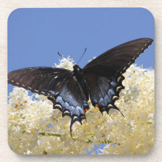 Butterfly On White Flowers Coaster