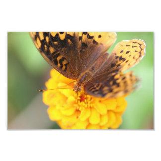 Butterfly on Yellow Flower Art Photo