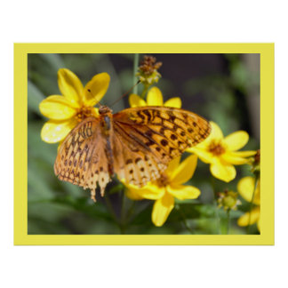 Butterfly on Yellow Flower Photo Poster