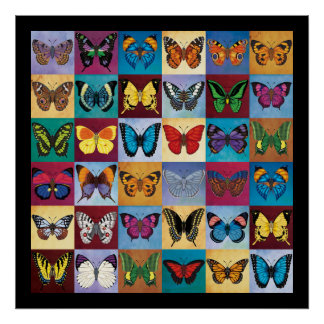 Butterfly Patchwork Poster