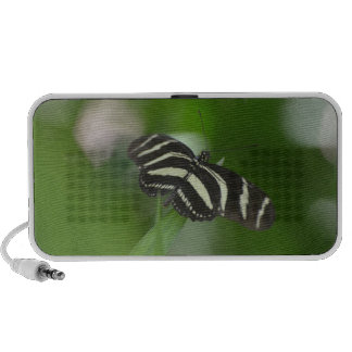 Butterfly Perfection iPod Speaker