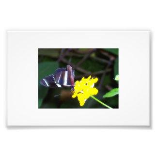 Butterfly Photo Art