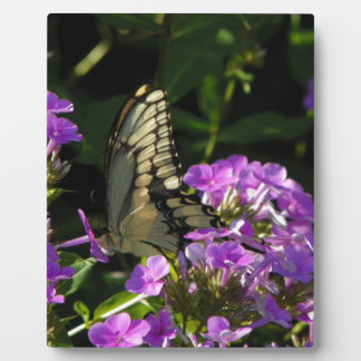 Butterfly Photo Gift Display Plaques