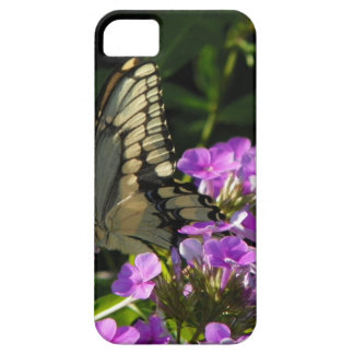 Butterfly Photo Gift iPhone 5 Cover
