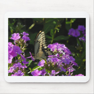 Butterfly Photo Gift Mouse Pad
