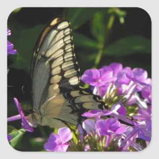 Butterfly Photo Gift Square Sticker
