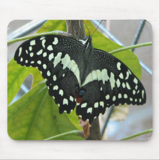 Butterfly Photo Mouse Pad