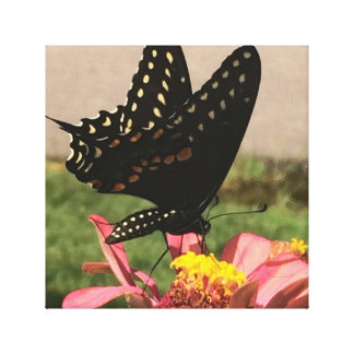 Butterfly Photo on Canvas Canvas Print