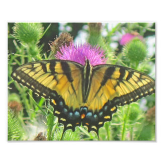 Butterfly Photo Print
