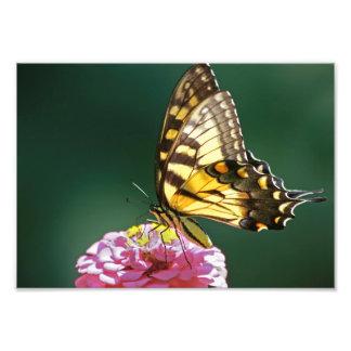 Butterfly Art Photo