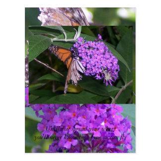 butterfly... postcard