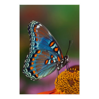 Butterfly profile on a flower poster