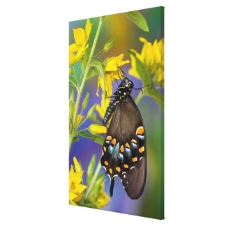 Butterfly profile on yellow flower canvas print