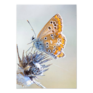 Butterfly putting on bluish pointed leaves card