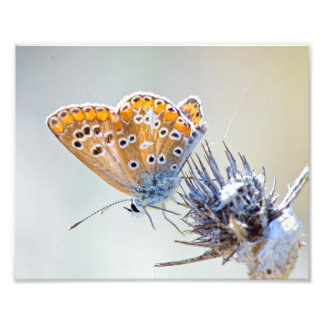 Butterfly putting on bluish pointed leaves photograph