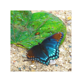 Butterfly Rests on Leaf Stretched Canvas Print
