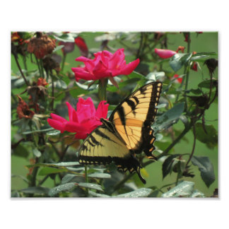 Butterfly Rose Art Photo