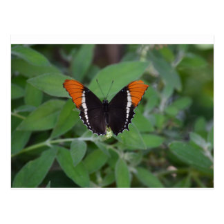 Butterfly Series 1 Postcard