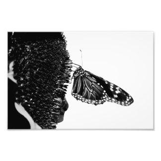 butterfly shy blacq photo art