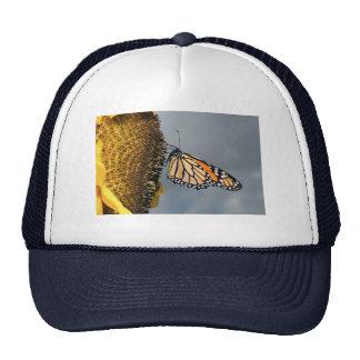 butterfly shy mesh hat