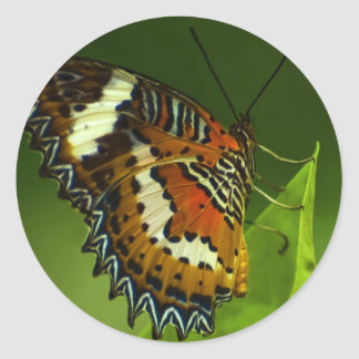butterfly sitting on a leave classic round sticker