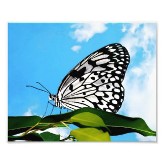 Butterfly & Sky Art Photo