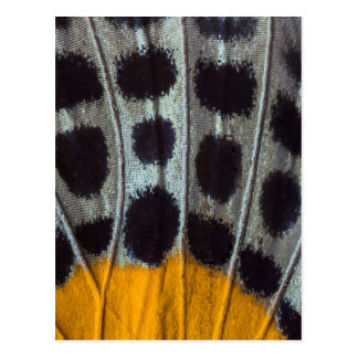 Butterfly spotted wing detail postcard