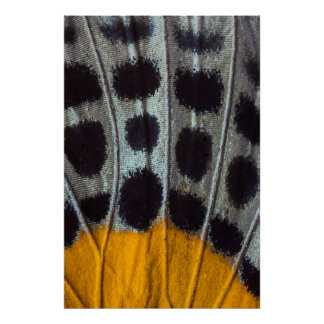 Butterfly spotted wing detail poster