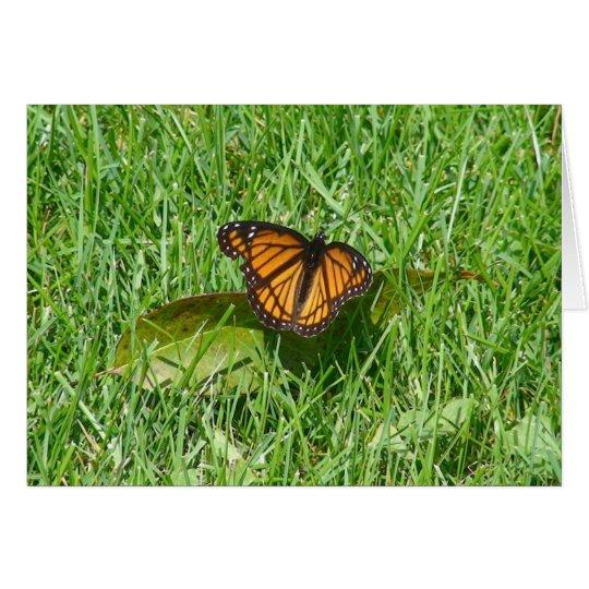 Butterfly summer card