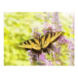 Butterfly - Swallowtail - Hard to swallow Postcard