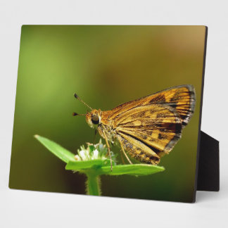 Butterfly Tamil Grass Dart with Bokeh Background. Plaque