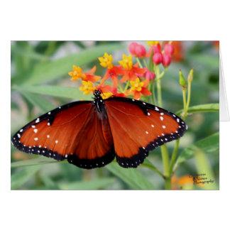 Butterfly Wide Open (5.0) Card