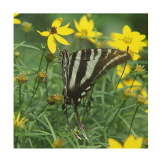 Butterfly, Wood Photo Print. Wood Canvas
