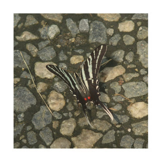 Butterfly, Wood Photo Print. Wood Canvases