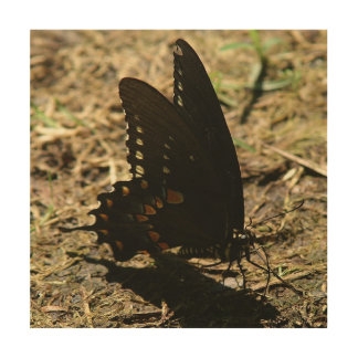 Butterfly, Wood Photo Print. Wood Print