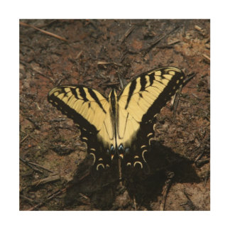 Butterfly, Wood Photo Print. Wood Wall Decor