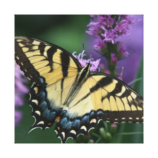 Butterfly, Wrapped Canvas Print.