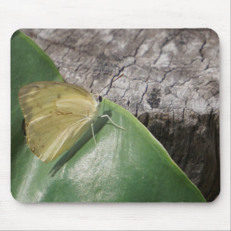 BUTTERFLY YELLOW GYPSY MOTH AUSTRALIA MOUSE PAD