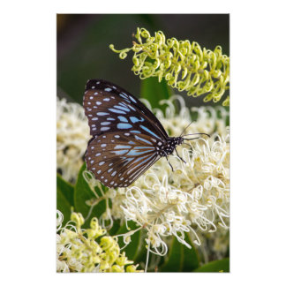Butterfly's Breakfast Photographic Print