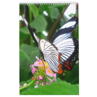 Butterfly's Wall Calendars