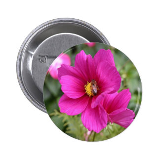 Button badge Pink Cosmos with a wasp