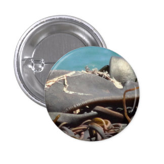Button Kelp close up
