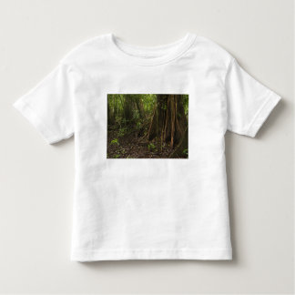 Buttress Roots. Rainforest, Mapari Rupununi, Toddler T-Shirt