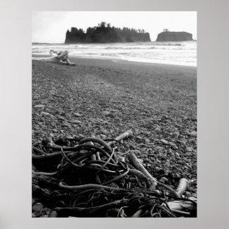 bw seaweed poster