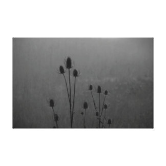BW Thistle in the Fog Canvas Print
