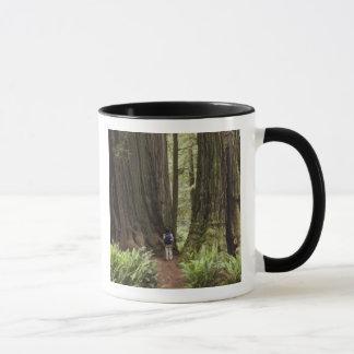 CA, Jedediah Smith Redwoods State Park, Mug