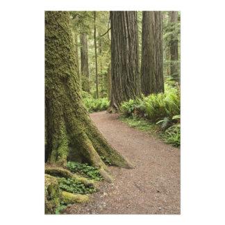 CA, Jedediah Smith State Park, Simpson-Reed Photographic Print