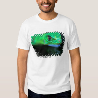 CA, Panama, Barro Colorado Island, baby Green T-shirts