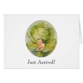 Cabbage Birth Announcement
