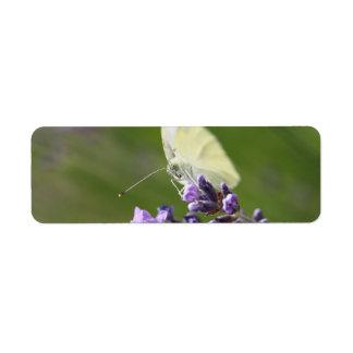 cabbage butterfly on lavendel return address label